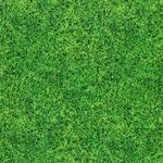 Swafing SCORE Rasen grün