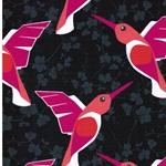 HUMMINGBIRD Sweat Kolibris anthrazit