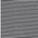 ISA Baumwollljersey schwarz weiß