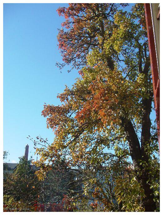 Was für ein schöner Herbst... 2