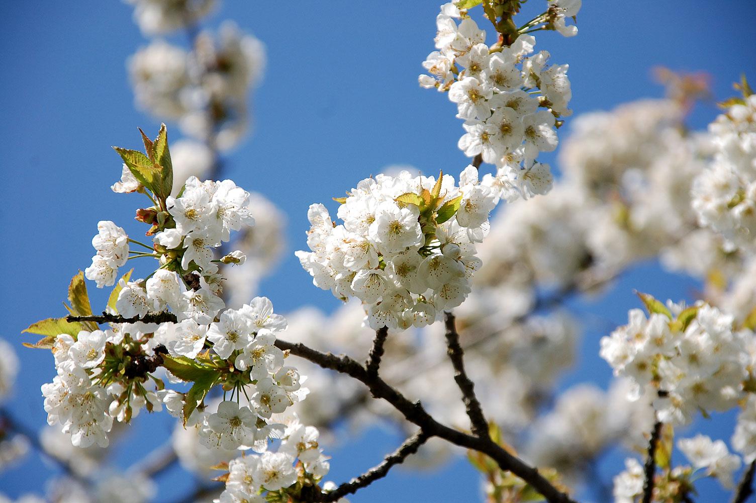 Endlich Frühling! 13