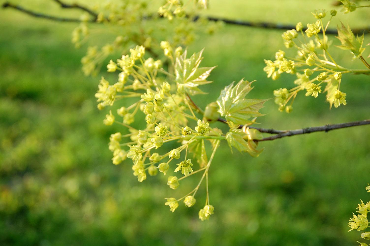 Endlich Frühling! 14