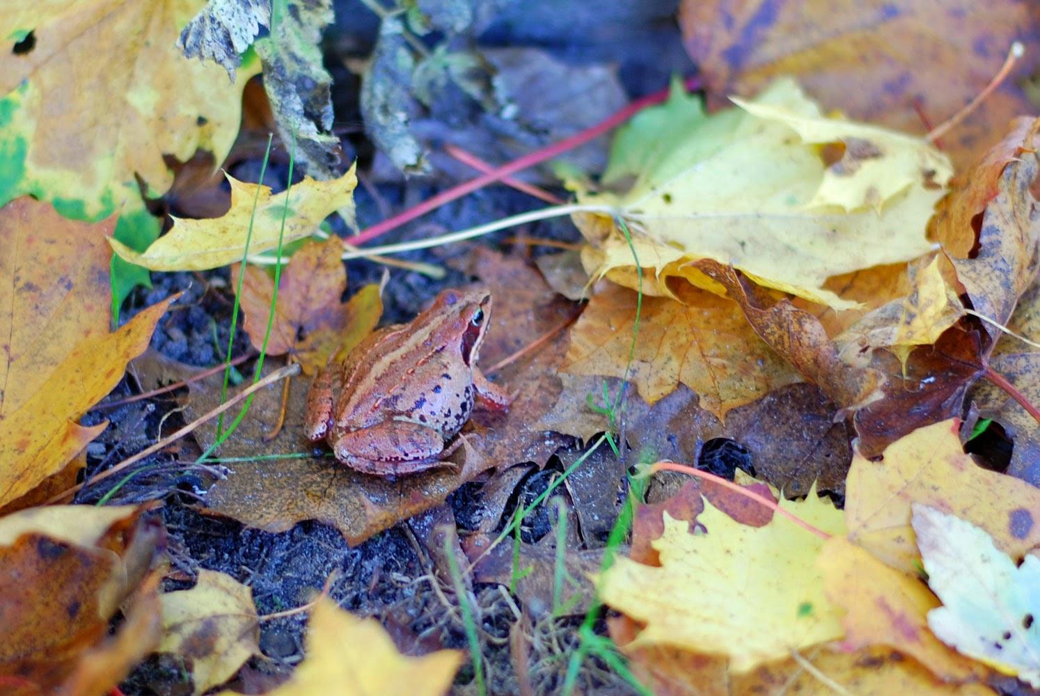 Herbstspaziergang oder Ferien auf dem Reiterhof 46