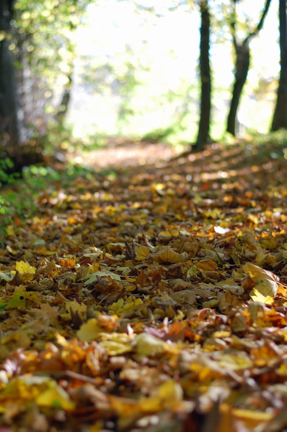 Herbstspaziergang oder Ferien auf dem Reiterhof 50
