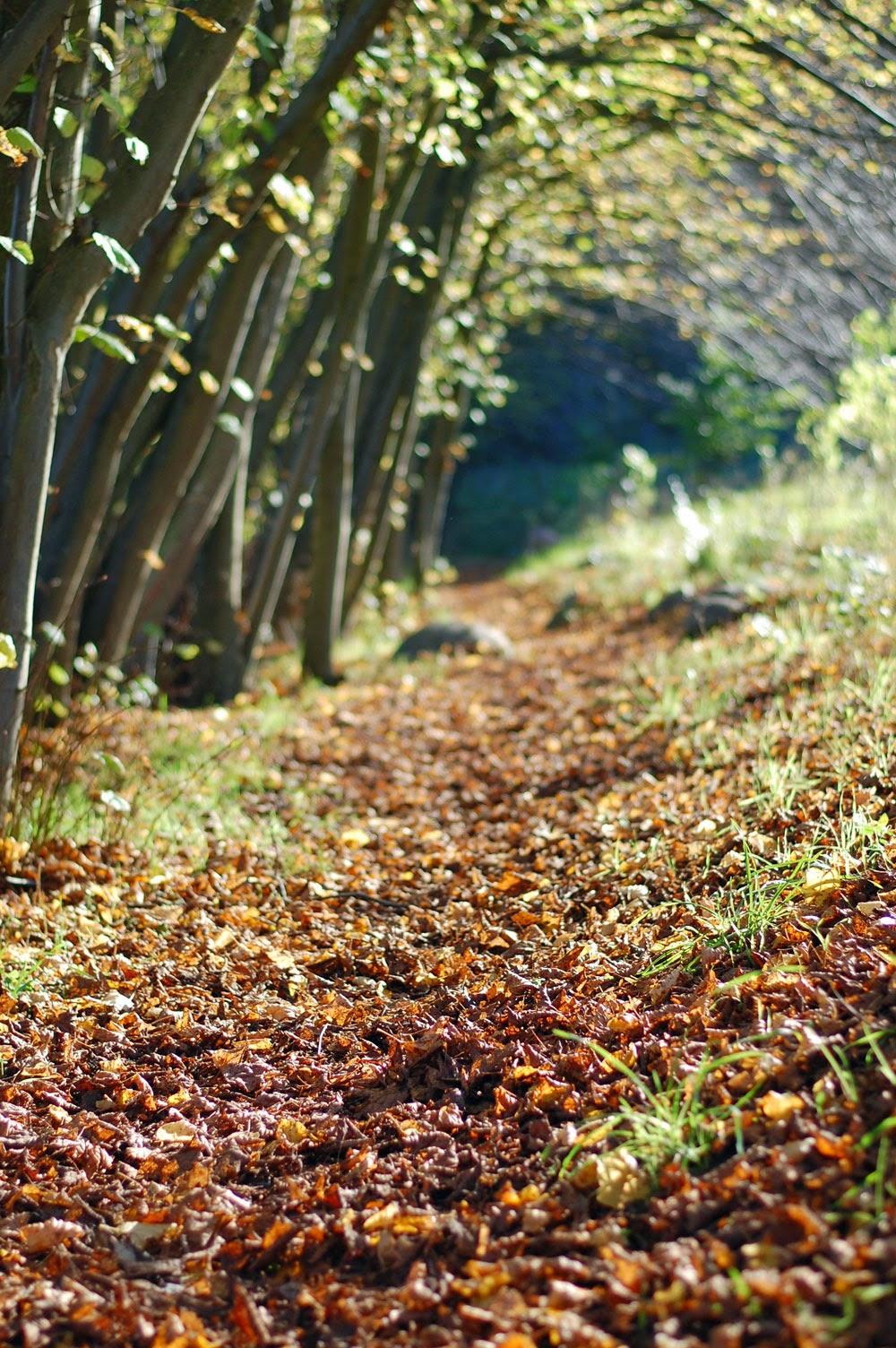 Herbstspaziergang oder Ferien auf dem Reiterhof 51