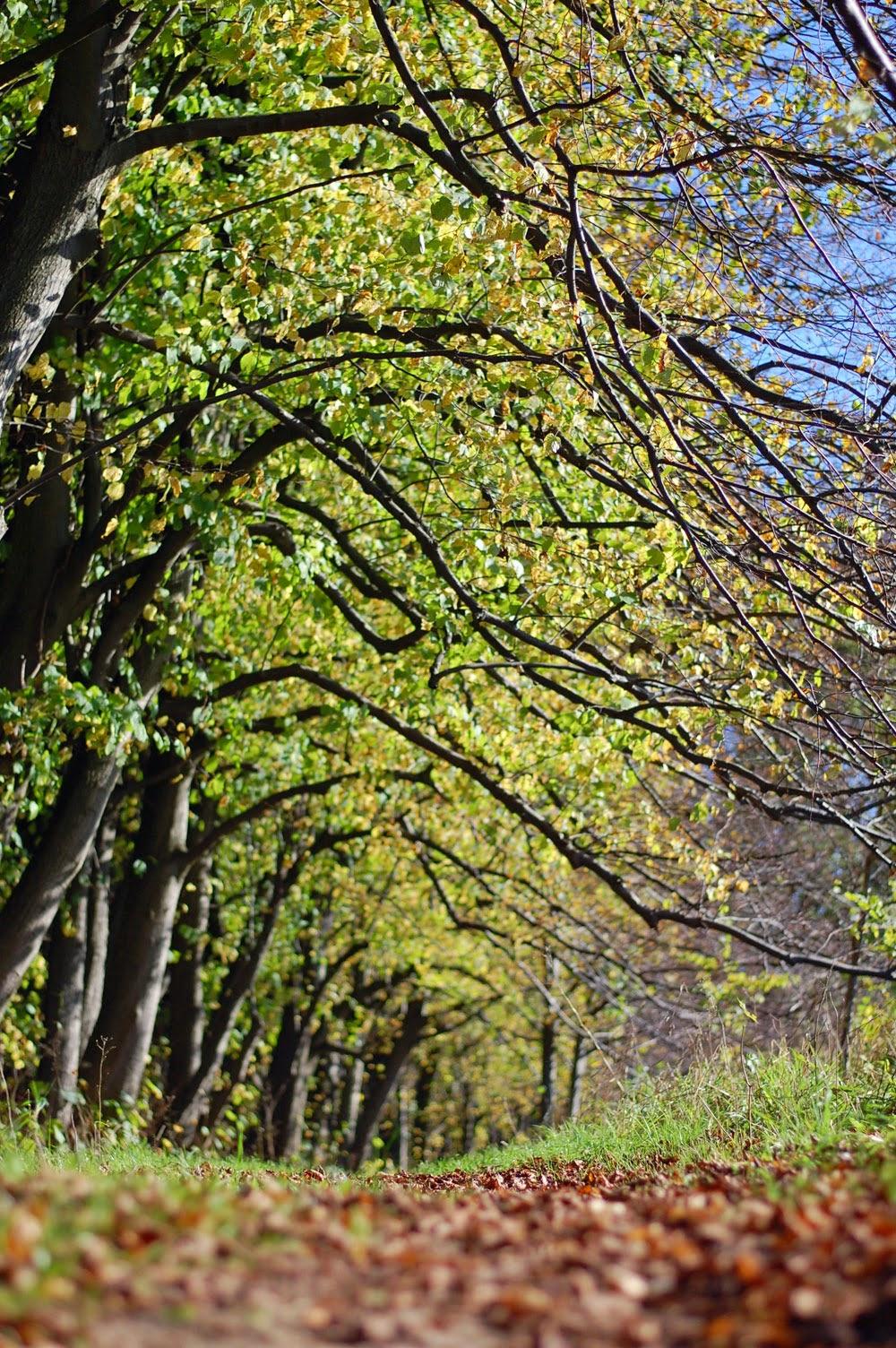 Herbstspaziergang oder Ferien auf dem Reiterhof 52