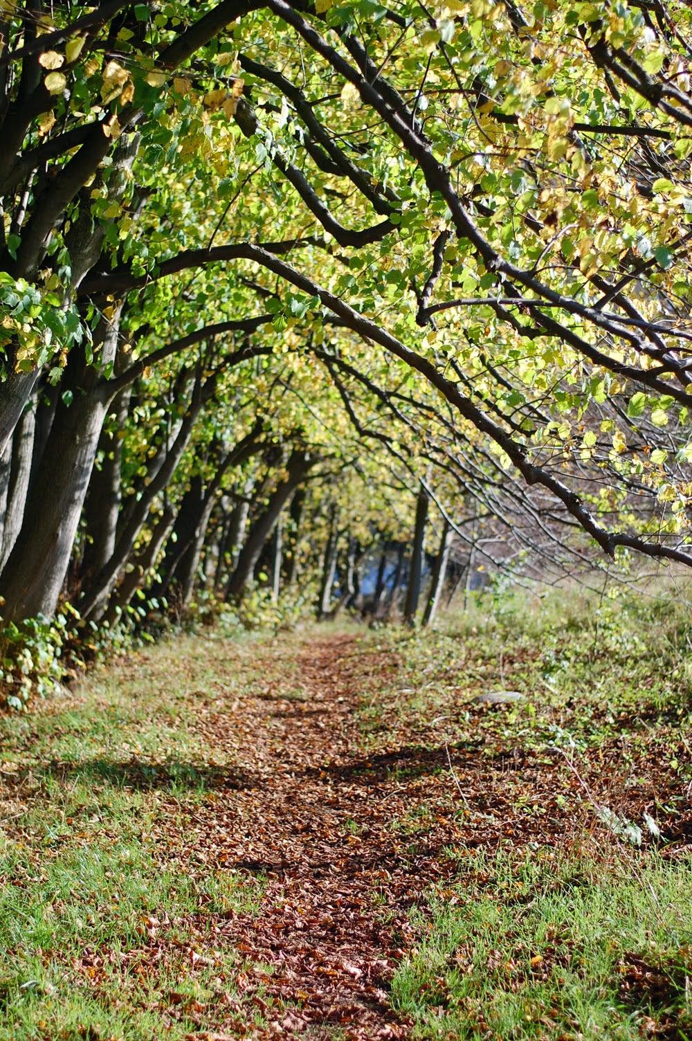 Herbstspaziergang oder Ferien auf dem Reiterhof 53