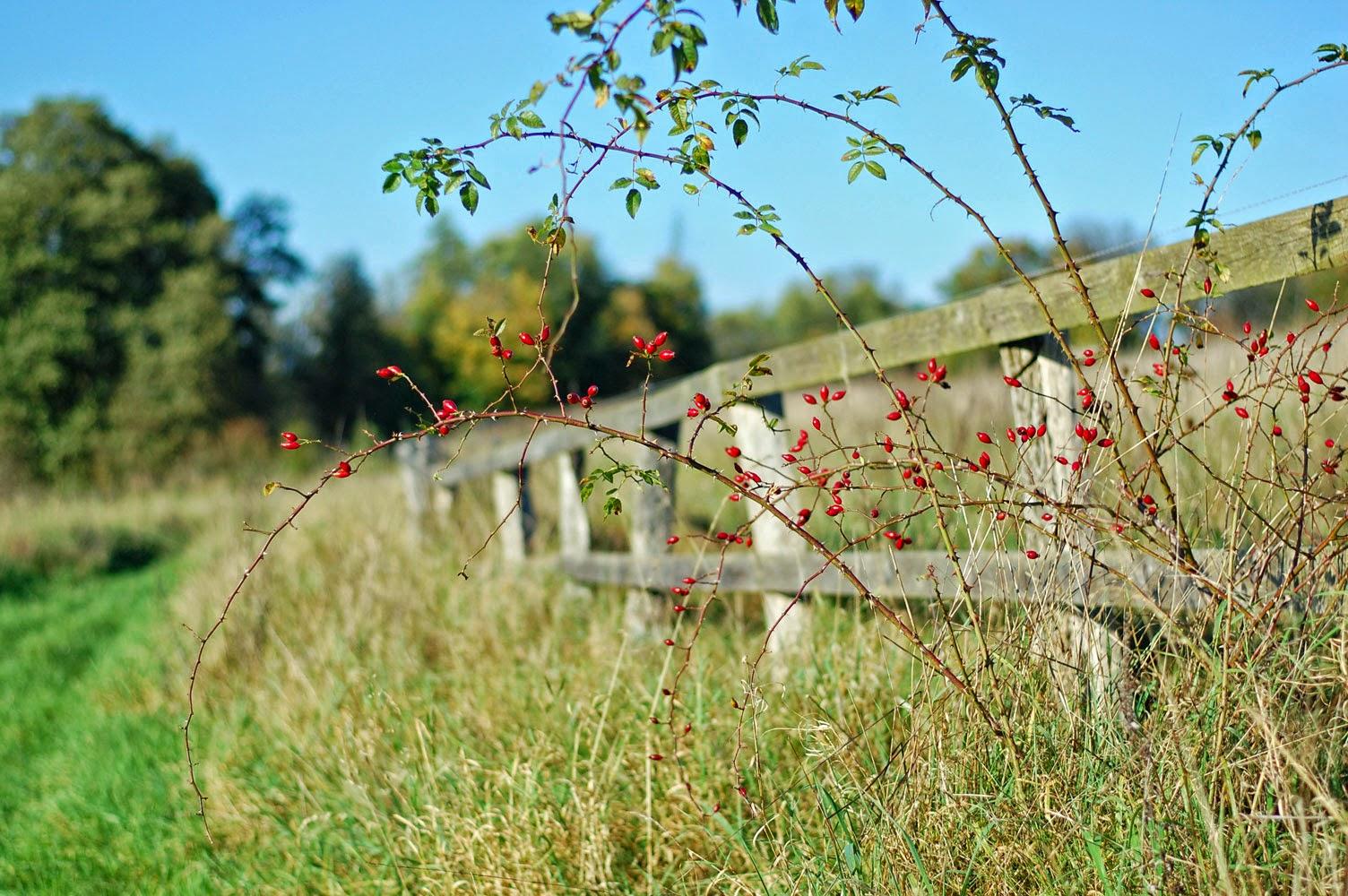 Herbstspaziergang oder Ferien auf dem Reiterhof 58