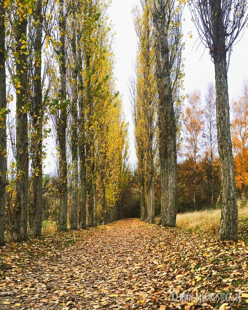 Herbstliches Nähtreffen und Lust auf ein NähMIRAkel XXL? 17